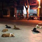 Cães de morador de rua esperam na porta de hospital seu dono terminar de ser atendido
