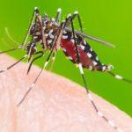 Risco de dengue aumenta com chuvas e calor