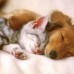 Saau realiza feirinha de adoção de cães e gatos no domingo