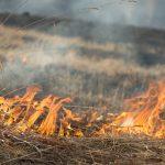 Colocar fogo em terrenos baldios é crime, alerta prefeitura