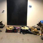 Cães farejadores localizam 100 kg de maconha em ônibus interestadual