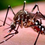 Primeira morte por dengue é confirmada em Maringá