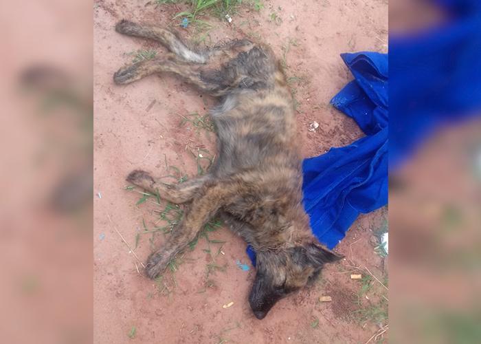 Cadela morre após suposto estupro em Lovat