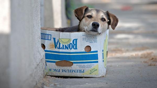 Prefeitura de cidade do Paraná dá desconto no IPTU para quem adotar cão de rua