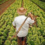 Dia do Agricultor lembra importância do homem  do campo para economia e desenvolvimento
