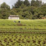 Estado lança edital a cooperativas de agricultores familiares
