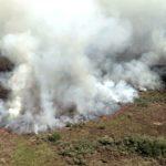 Incêndio atinge quase metade do Parque Nacional de Ilha Grande