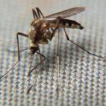 Paraná tem um município em epidemia e oito em alerta para a dengue