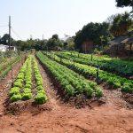 Associação Vida e Solidariedade ganha horta comunitária