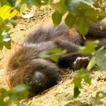 Paraná soma 40 mortes de macacos por febre amarela