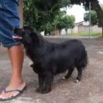 PM é acionada após homem agredir cachorro com cabo de vassoura em Umuarama