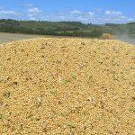 Agronegócio é responsável por 77% das exportações do Paraná