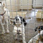 Paraná pode ganhar 1ª delegacia especializada em crimes contra animais