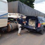 PRF apreende meia tonelada de maconha escondida em tanque de caminhão, em Alto Paraíso