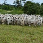 Criminosos armados rendem família, roubam caminhão e furtam 30 cabeças de gado
