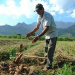 Câmara aprova auxílio emergencial para agricultor familiar na pandemia