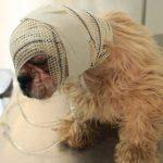 Cão resgatado em péssimas condições se recupera em Umuarama