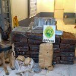 Com ajuda de cães, PM apreende mais de 38 toneladas de maconha no Paraná