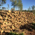 Polícia Ambiental flagra desmatamento e aplica R$ 9,7 mil em multas em Altônia