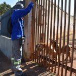 Copel alerta sobre cuidados com cães para evitar acidentes