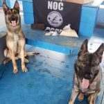 Polícia apreende cocaína escondida em farofa encaminhada a presos no interior do PR