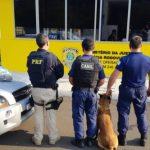 PRF apreende 18,5 quilos de crack e skunk escondidos no tanque de uma caminhonete em Irati