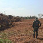 Denúncia leva Polícia Ambiental à aplicar R$ 80 mil em multas por desmatamento em Iporã