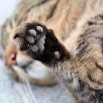 Homem é preso após matar quatro filhotes de gato em Umuarama