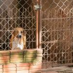 Saau de Umuarama precisa de doação de ração para animais de rua