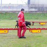 Bombeiros promovem certificação estadual de cães de busca e resgate