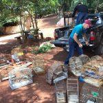 74 pássaros apreendidos em cativeiro são devolvidos à natureza