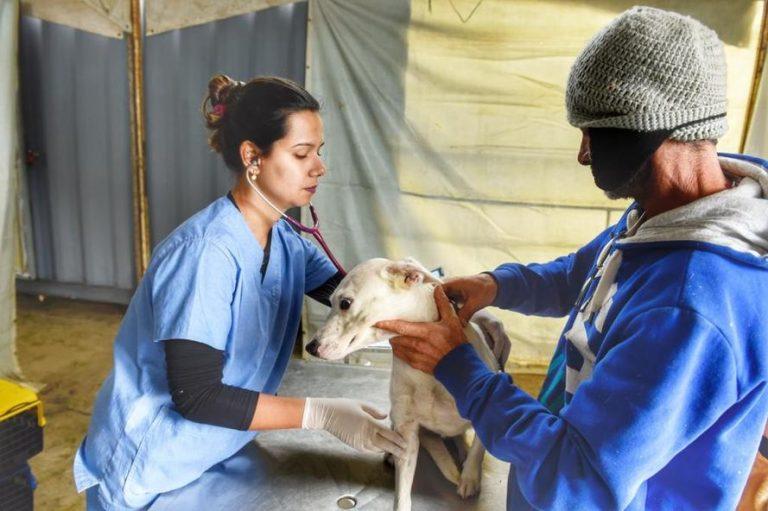 Programa Permanente de Castração de Cães e Gatos chega ao município de Mariluz