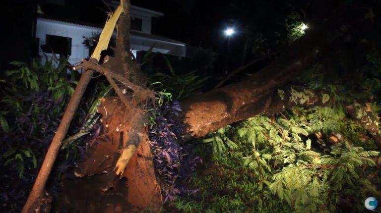 Chuva causa queda de árvore na avenida São Paulo, em Umuarama