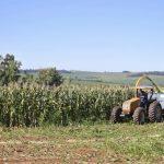 Apoio do município garante silagem para alimentação do gado no inverno