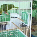Polícia Ambiental resgata aves vítimas de maus-tratos em Umuarama
