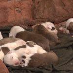 Operação conjunta flagra 14 animais em situação de maus tratos em Umuarama