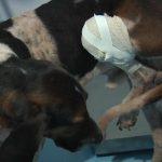 Sete cães vítimas de maus tratos são resgatados em Maria Helena