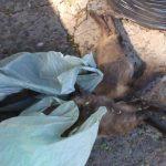 Gatos são mortos com suspeita de envenenamento em Umuarama