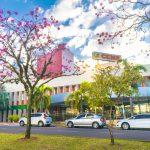 Profissionais de saúde e pacientes curados da Covid-19 participam de plantio de ipês
