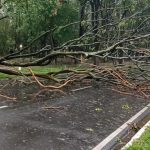 Temporal com rajadas de vento de 100 km/h derrubam diversas árvores em Umuarama